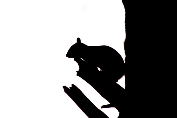 Squirrel Silhouette: http://www.scottliddell.n ..