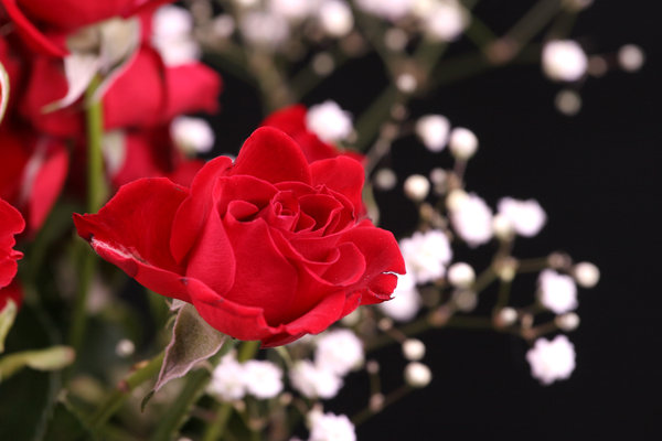 Red Roses 1: http://www.scottliddell.n ..
