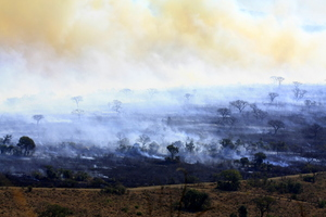 Bush Fire 4: A bush fire sweeping through the african landscape