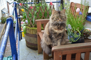 Sitting Pretty: Cat sitting outside a cottage in Clovelly, Devon