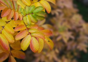 Autumn leaves: Leaves in november