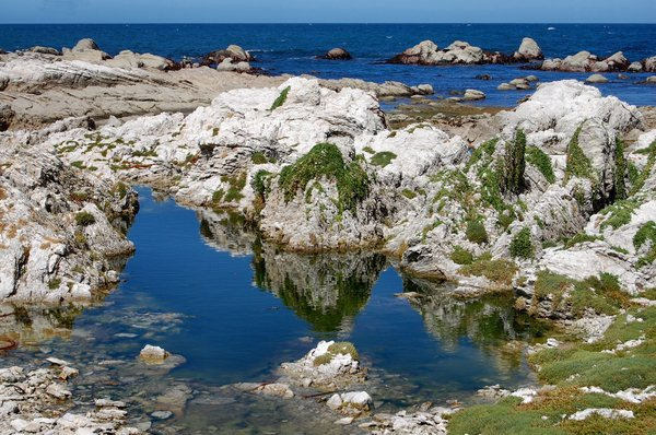 Rockpool reflections: Kaikoura Peninsula in South Island, NZ