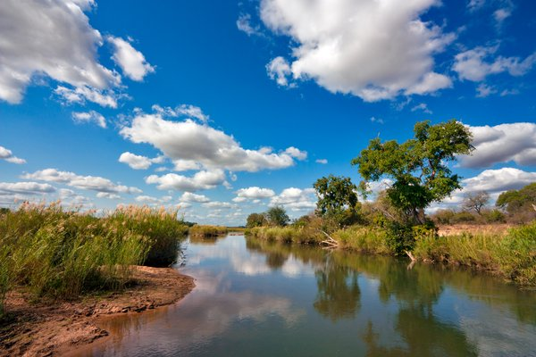 Kruger Park Landscape: Landscape scenery in Kruger National Park, South Africa.