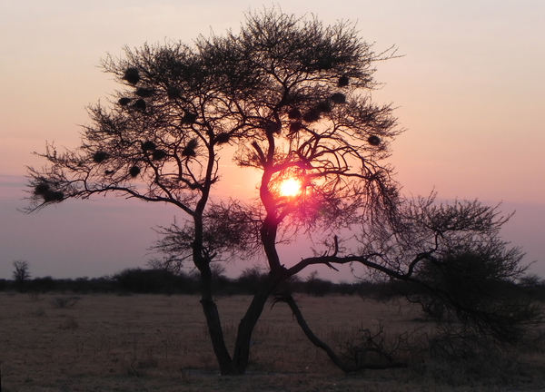 sunset in Botswana: none