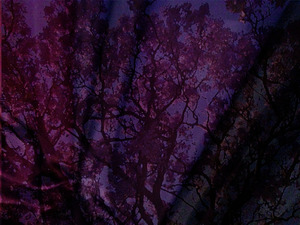 Advent Drapes - Series 2 (3): (CREATED TO USE AS BACKGROUND IMAGES FOR SONGS, PRAYERS AND ETC.)