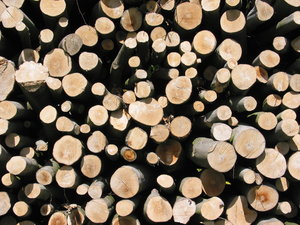 Chopped Wood: PLEASE RATE THIS PHOTO!No description