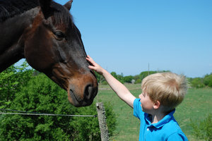Boy and Horse 2: Boy and Horse.