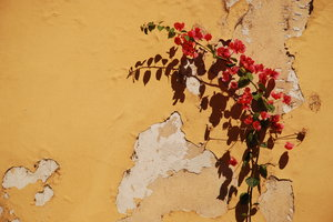 Wall Climber: Plant climbing the wall with some firm support.