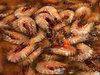 cold prawns: prawns in brine at fish market