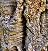 cork tree bark textures: cork tree bark textures