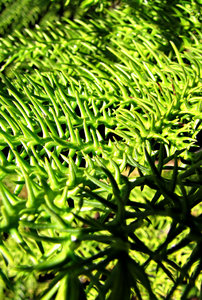 curved green spikes: spiky green foliage