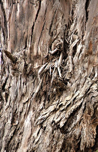 barking up a tree: a variety of bark - tree trunk surfaces