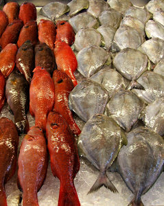 at the fish market: display of fish for purchasing in fish section of wet market