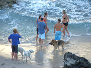 dog's day at the beach: people taking their dogs for fun at the beach