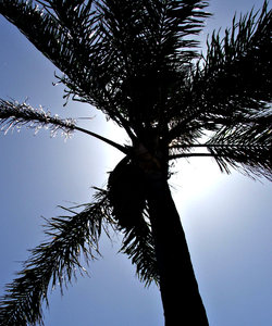 blowing in the breeze: palm tree fronds bending/blowing in the breeze silhouetted against sun