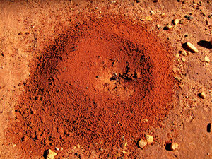 red entrance -  bull ants nest: red pindan soil bull ants nest entrance