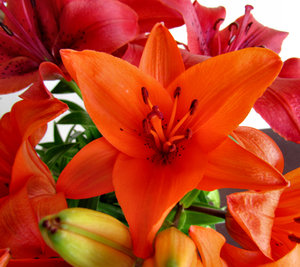 lily display4: colourful bunch of oriental lilies