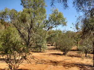 arid area4: dry bush country in central Australia