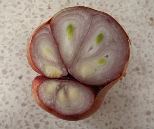 fresh shallots2: cross-cut section of shallot - showing separate cloves