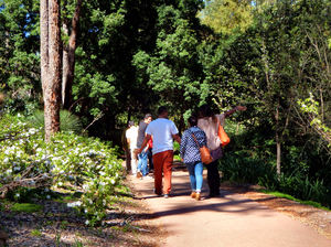 along the bush path1: tourists walking along bushland park path