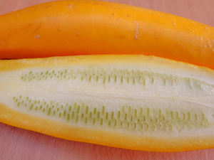 vegetable colours9b: yellow-zucchini