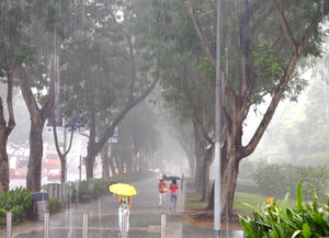 tropical downpour2: heavy afternoon tropical rain downpour in Singapore