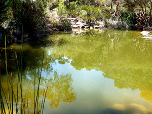 green pond reflections2: shadowy reflections on green water pond