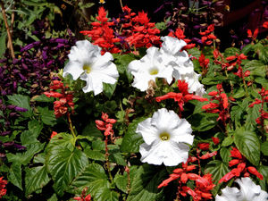 garden colours1: variety of contrasting colourful garden flowers
