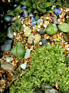 cacti & succulent gardens24: cacti and succulent varieties in specialised cactus garden