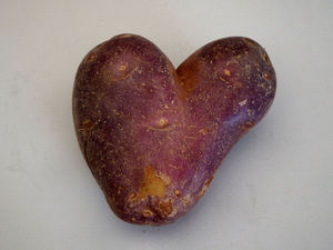 potato love1: heart-shaped royal blue potato