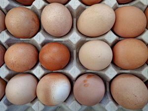 egg-ceptional food2: farm fresh eggs in container/tray of pressed cardboard