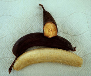 black & ripe: small banana variety not firm and ripe until skin/peel blackens