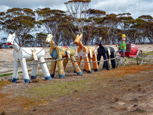 horsing around8: Aussie public farming humour  celebrating horses in roadside paddocks (public domain photography and sharing encouraged)