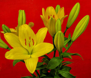 golden flower arrangement5: bunch of yellow oriental lily flowers and buds