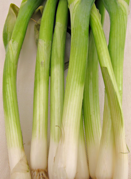 spring onions: small loose bunch of raw spring onions
