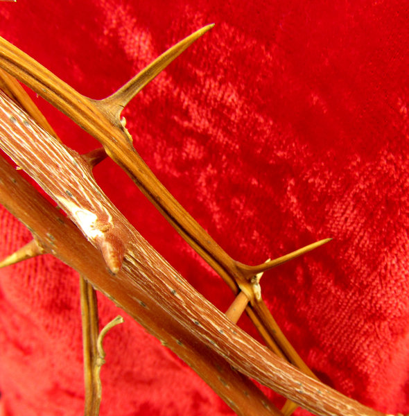 crown of thorns: crown of thorns on red cloth background