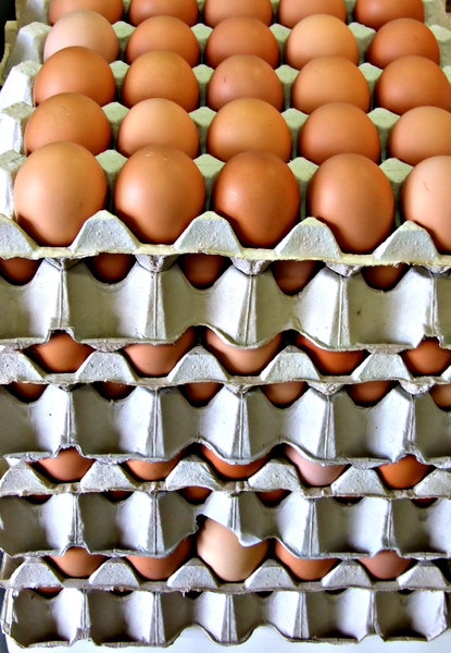 eggs-stack-ly: shaped carton trays of fresh eggs