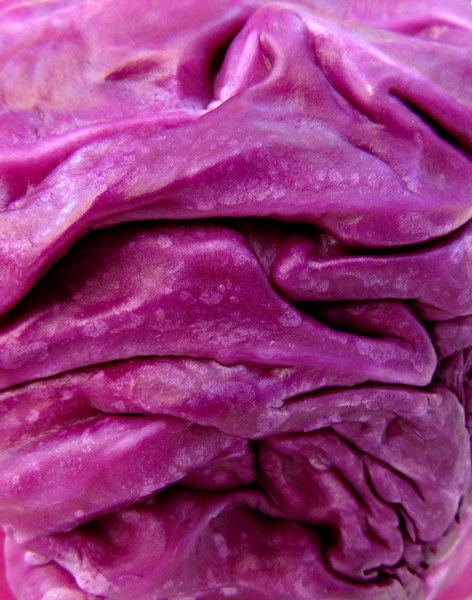 red cabbage: raw red cabbege head folds and creases