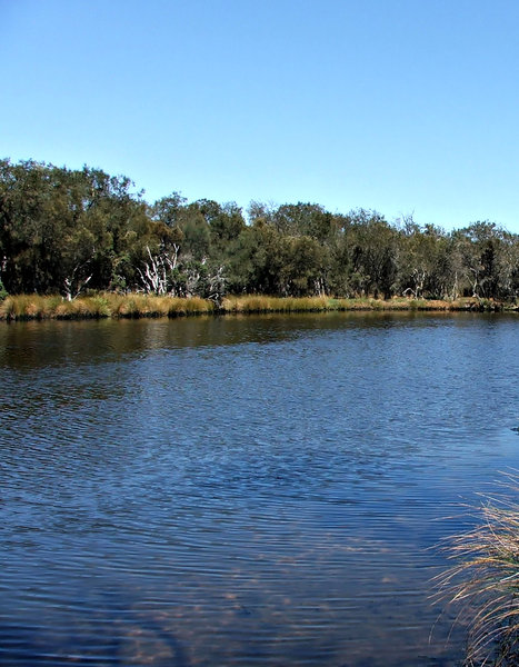 tranquil bush lake: image of tranquil lakeside