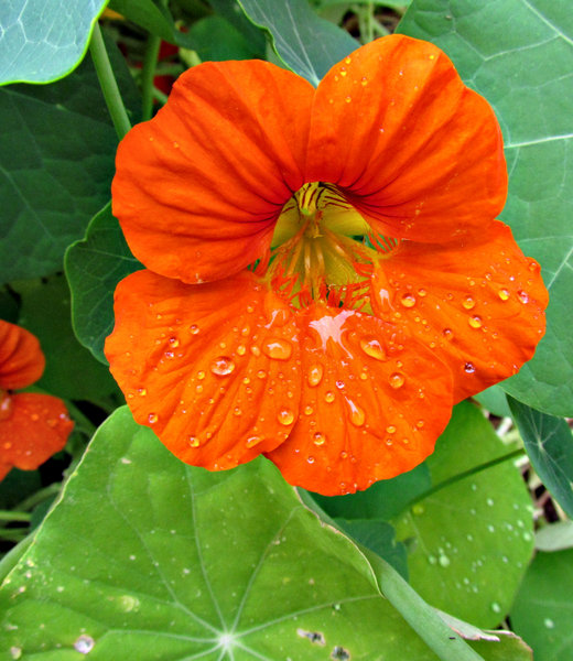 raindrops keep falling: raindrops cling to garden plants