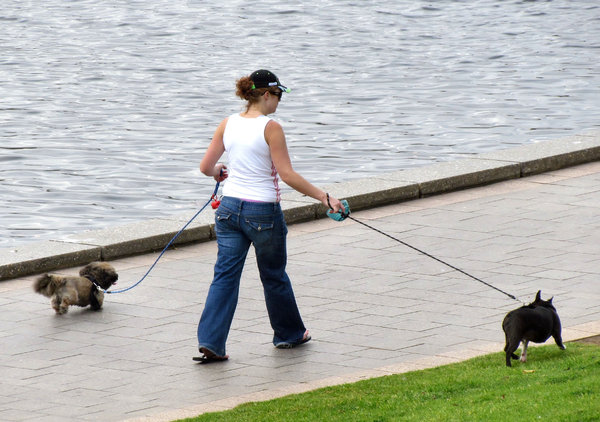 walking the dogs: young woman walking her dogs alongside the river