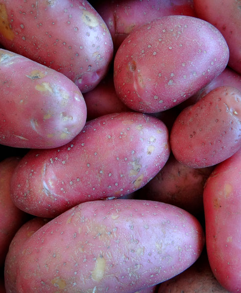 pink potatoes5: bulk quantitiy of pink Desiree potatoes
