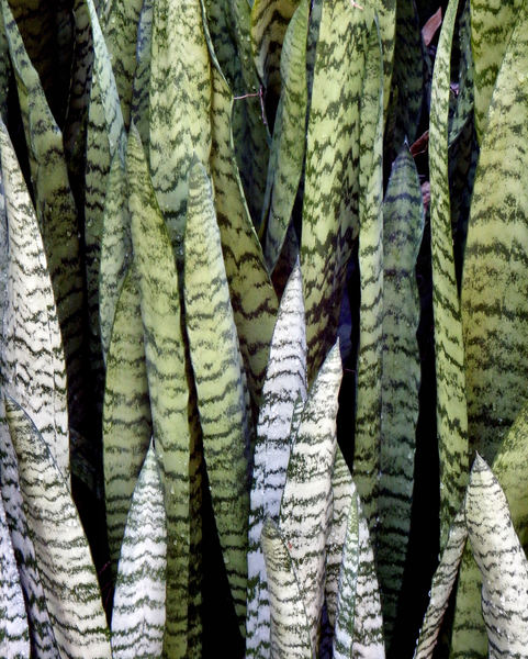 colorful background foliage9: mottled garden foliage display