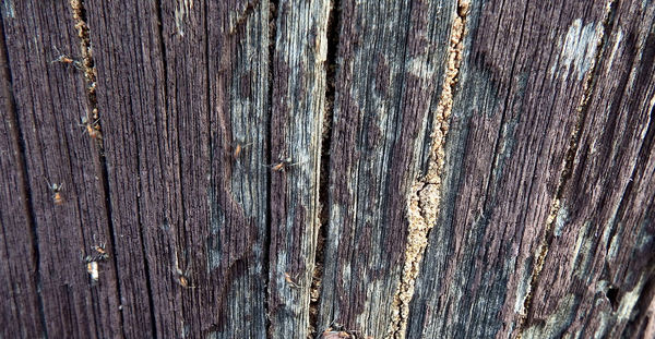 termite trails5: dangerously termite riddled suburban street power poles