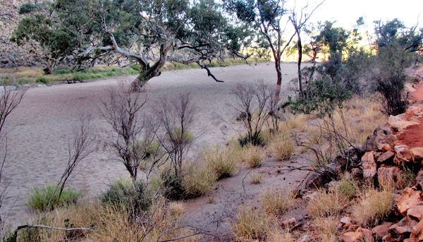 dry river7b: dry river bed in central Australian drought