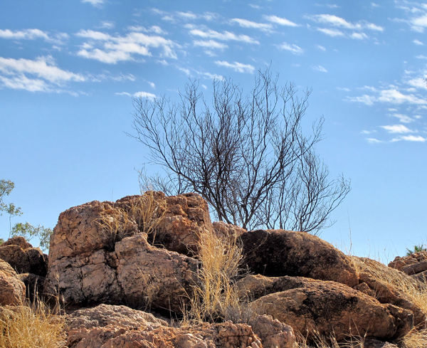 drought in dry brown land1: rocky drought stricken terrain in Central Australia
