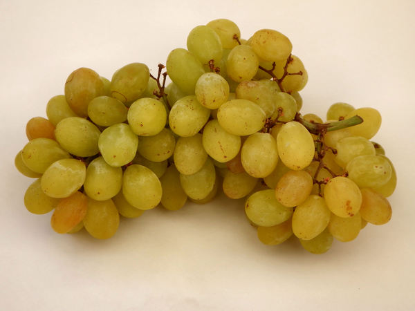 seedless grapes1: bunch of seedless green grapes