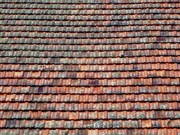roof lichen2: lichen covered roof tiles