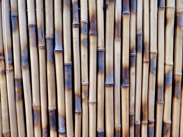 bamboo fencing1: bamboo screen fencing