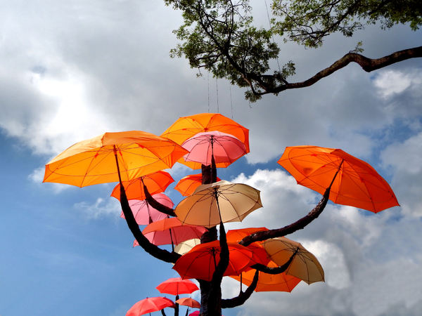 umbrella trees garden7: colourful umbrella display on vacant land in Little India, Singapore